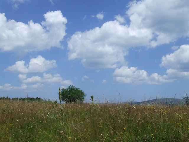 landscape meadow & clouds