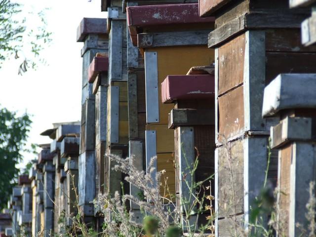 Beehive city